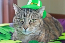 "St PETrick's Day / Petfinder.com and Animal Planet are teaming up to show off the cutest and funniest ways pets are getting in on St. Patrick's Day celebrations. Many of the pets included are adoptable, so ""repin"" to help them find homes! / by Petfinder.com"