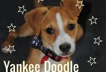 Celebrate Independence Day - Adopt! / by Petfinder.com