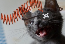 Arrr-dopt a Pet for #TalkLikeAPirateDay! / by Petfinder.com