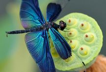 "DRAGONFLY/Sewing-Needle Bug Lovingly known as ""Sewing Needle Bug"" / by Burda LaBlonde Hautala"