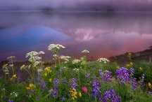 Wildflowers / by National Parks Conservation Association