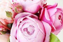 {Florals} / by Tori Tatham