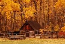 fall is my favorite / by Sarah Keller