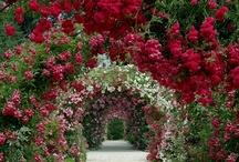 There was a garden...  John 19:41 / Gardening  / by Lizabeth