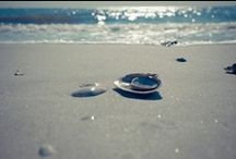 Florida  / by Kristen Kroening