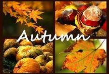 Fall into Autumn / All about Fall / by Stephanie Torsell ღ