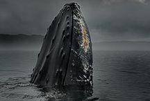 Underwater World  / by Jessica Phillips