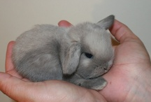 Bunnies - Best INDOOR Pets EVER / DOMESTIC BUNNIES ~ BELONG INDOORS They can get a PARASITE within seconds and eventually dying from it! THINK before bringing outside! Nevermind the HAWKS that can swoop down and grab them, or dogs that can catch them in their jaws...THINK! / by Cottage Gal Style