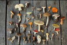 Mushrooms And Beautiful Fungi / by Greenspirit