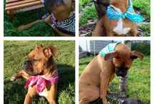 Boxers.....and other cute animals / Boxers.......cute animals  / by Cheryl Ortega