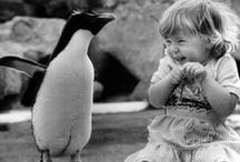 Penguins / by McKayla Gardner