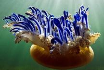 Ocean Wonders / by Pamela Jeanne