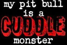 Pups / Pit bulls . Pibble . Jack Russells . Terriers .  / by Courtney Heintz