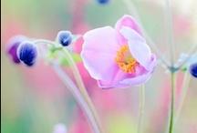 Plant Picks / by Rachael Zeller