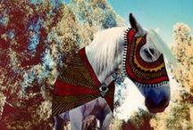 cheval / Hermosa / by =ąlliⅇ=