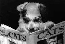 Animals Reading / by Portsmouth Public Library