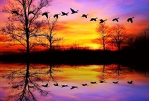 Reflections / by Soledad Vilchez #1