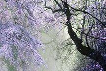 Purple Passion / My favorite color! Indigo, violet, purple, orchid, plum, lilac, lavender…  / by Cathy Kent