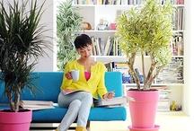 Kamerplanten - houseplants / Inspirerende foto's en tips voor kamerplanten - Inspiring pictures and tips for houseplants   / by Tuinen.nl