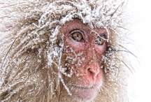 Winter*Animals / by Cathy Kent