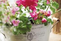 Tuindecoratie - container gardening / Inspiratie voor het decoreren van bloemen en planten - Inspiration for decoration flowers and plants / by Tuinen.nl