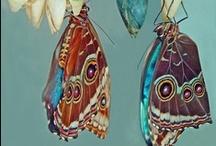 Vlinders - Butterflies / by Tuinen.nl