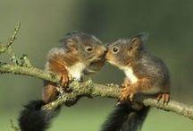 Just 4 fun eekhoorns  - squirrels / by Tuinen.nl