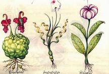 Botanical & Scientific illustration / by Ariádine Menezes