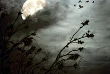 moonlight / by Sherry Petryshyn