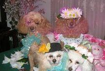 Luv  Poodles / Poodles so smart, so human, so loving just so wonderful... / by Sandy Lee Cali