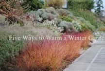 Winterest in the Garden / Texture, Shape and Form are the stars of a winter garden - not to mention bark, berries, seed heads and stems / by Rebecca Sweet | Harmony in the Garden