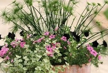 Container gardening.. / by Liz Myers