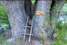 TREE HOUSES  / by FIONA WILSON (Mc Kenzie)