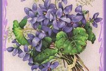 Printables--flora  / by Violet Hoarder