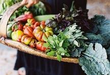 Garden / by Jill Snyder