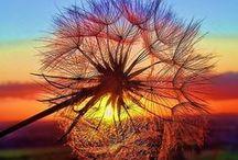 Nature / Nature, paysage, voyage, Travel, lieux à visiter / by Lynda Mence