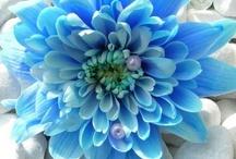 Flowers!  <3 / by Sapphire Moonbeam
