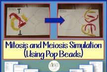 Mitosis and Meiosis - Cell Division / Everything you need to teach a unit on mitosis and meiosis! / by Science Stuff