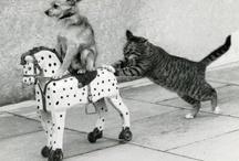 Hilarious! / by Alison Bennett