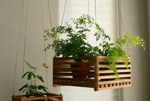 My Mommas green thumb / ideas for planting next year. / by Keep You In Stitches Designs by Leshia