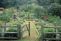 Dirty Stuff, Yard & Garden / by Larry Smith