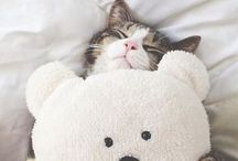 "Adorables / Furry Friends  / 100% ""awwwww"" / by Jamie Lynn"