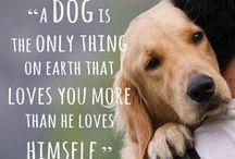 Dogs & Friends / by Gabi Dugal