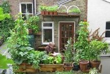 Small Space Gardening / by Backyard Unlimited--California's Amish-Made Sheds & Gazebos