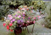 Garden ideas / by Regina Goncalves Stahlke