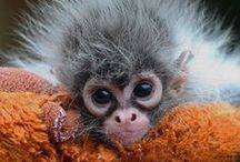 Squirrels, monkeys, hedgehogs  etc. / by Cathy Buzard