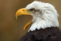 I luv Eagles / by Mary Davidson