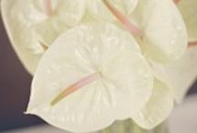 Wedding / My Bali wedding flowers and decoration / Inspiration for Bali tropical wedding flowers / by Lani Cantor Vatland