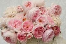 Les Fleurs / by Michelle Gion