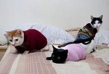 C·R·E·A·M / b :    Cats · Rule · Everything · Around · Me / by Ɣ I K Ŧ O R I ▲